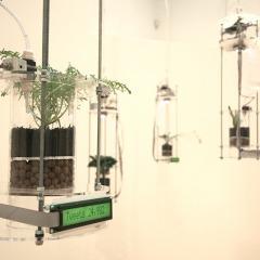 © Stephanie Rothenberg, Dettaglio Planthropy, da: www.stephanierothenberg.com